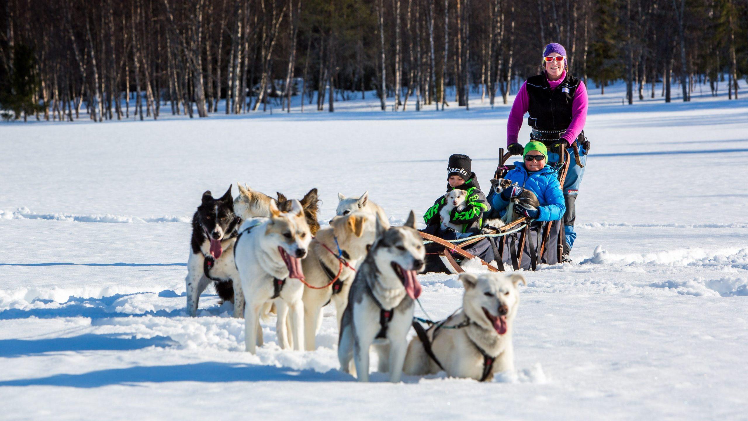 med-hundeslede-i-magisk-vinterlandskap