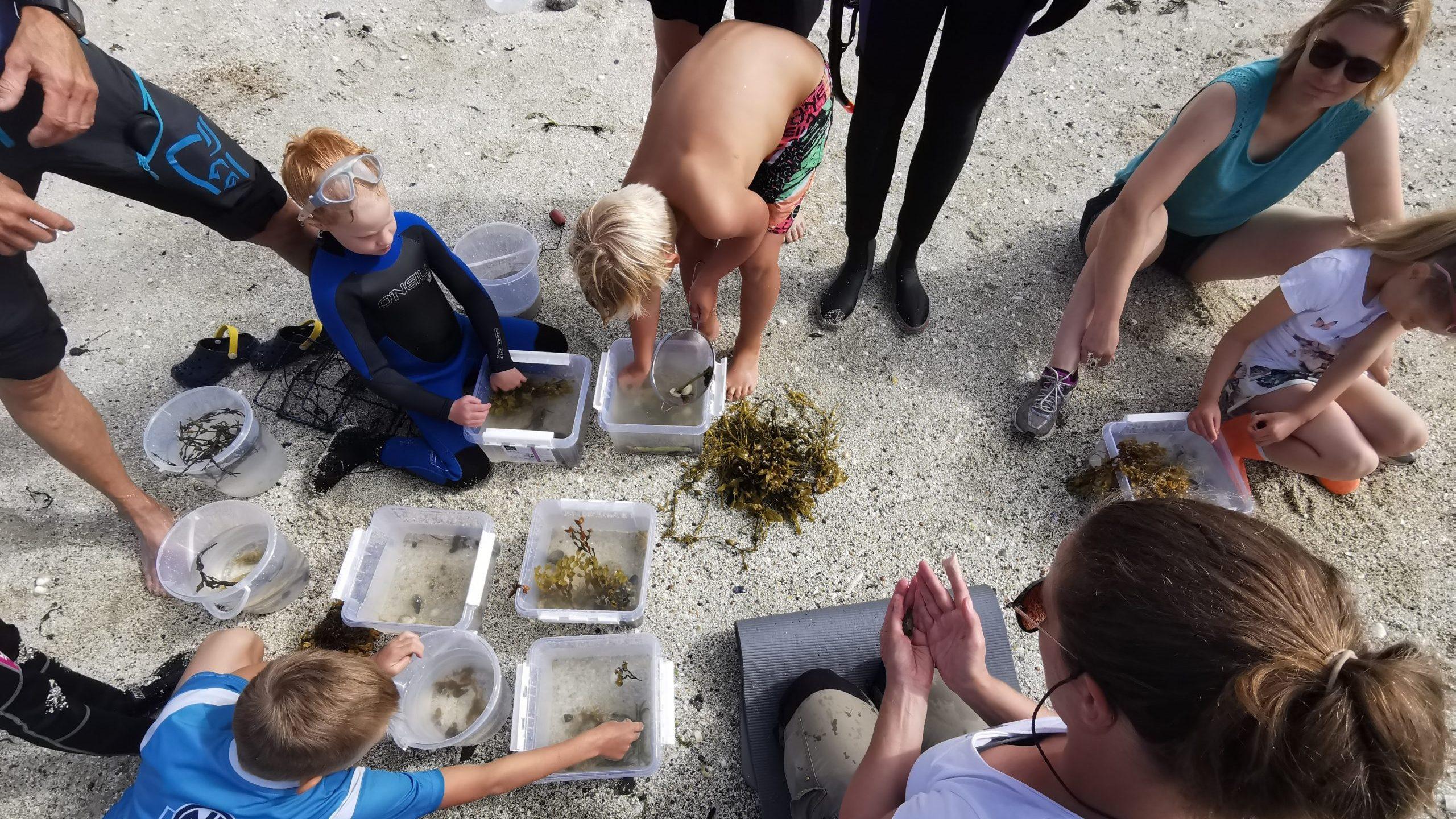 Barna utforsker livet i fjæra under Barnas Havdager på Ylvingen