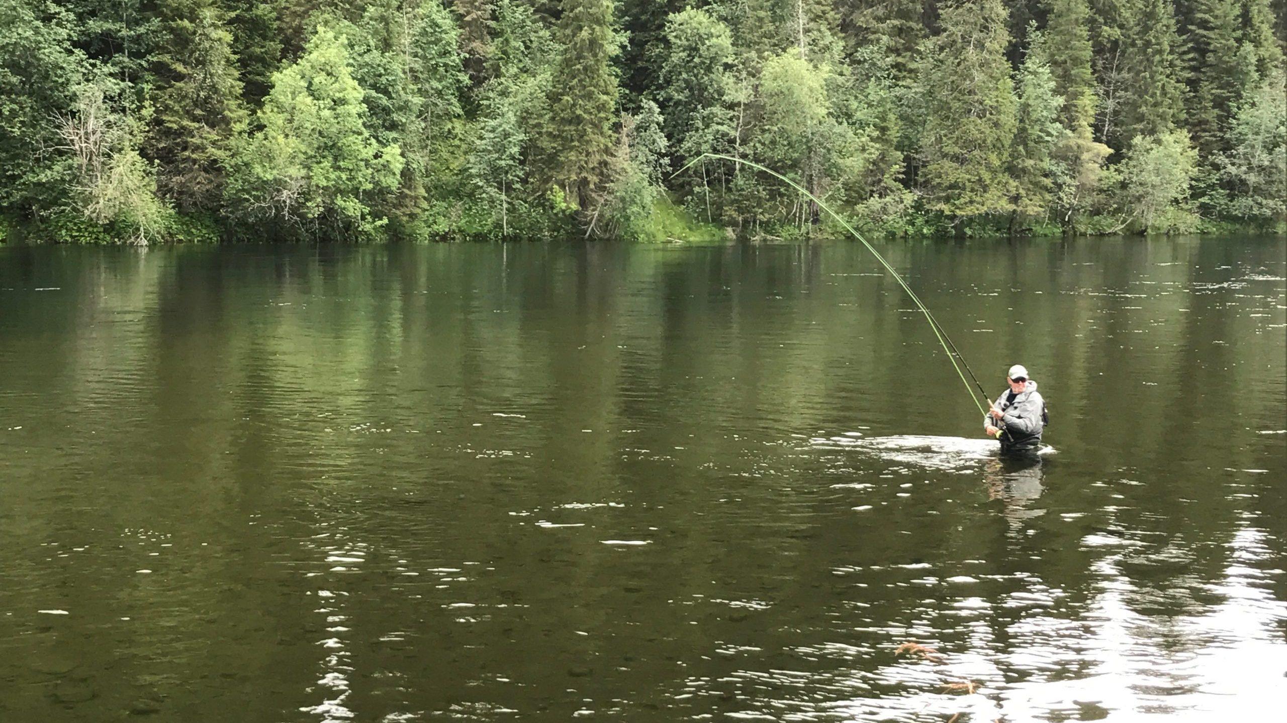Laksefisker som står midt i elva med fisk på kroken