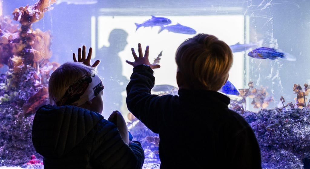 Norsk Havbrukssenter-barn ved akvariumet